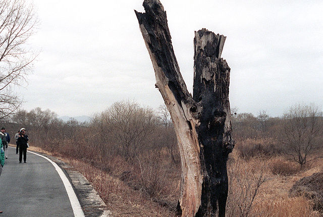 Remnants of the tree that started it all. This picture was taken by U.S. Army personnel, and is in the public domain.