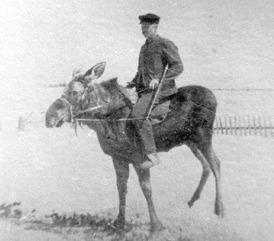 moose-rider